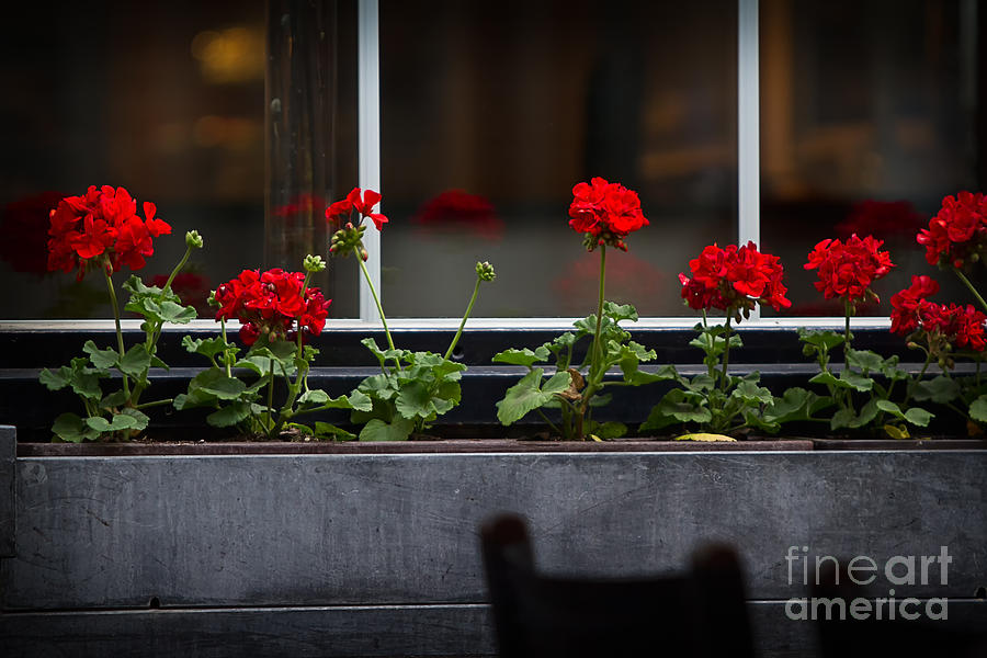 Geranium Flower Box Photograph  - Geranium Flower Box Fine Art Print