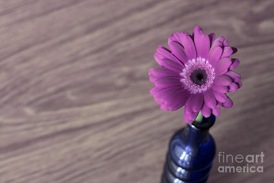 Gerbera Into Blue Vase Pyrography