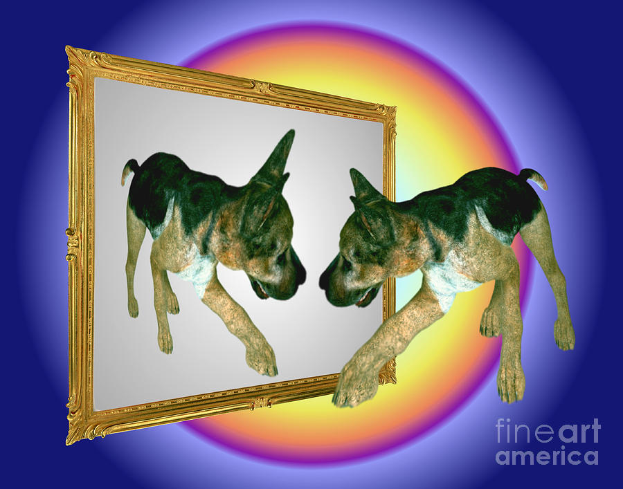 German Shepherd Puppy In Mirror Digital Art  - German Shepherd Puppy In Mirror Fine Art Print