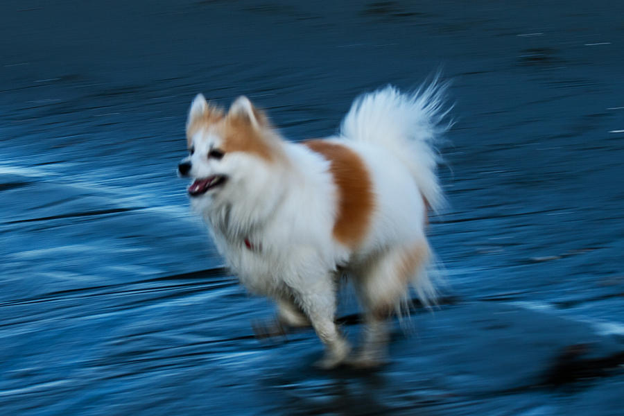 Ghost-dog Photograph  - Ghost-dog Fine Art Print