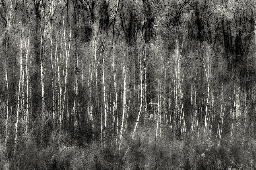 Ghost Of The Forest Photograph  - Ghost Of The Forest Fine Art Print