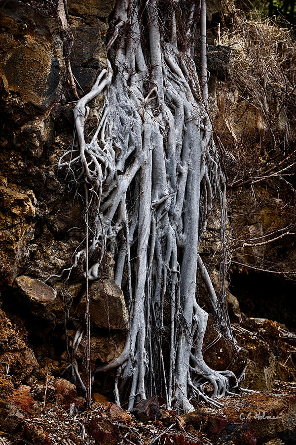 Ghostly Roots Photograph  - Ghostly Roots Fine Art Print