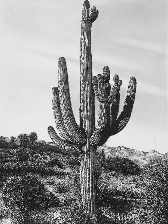 Giant Saguaro Cactus By John Bowman