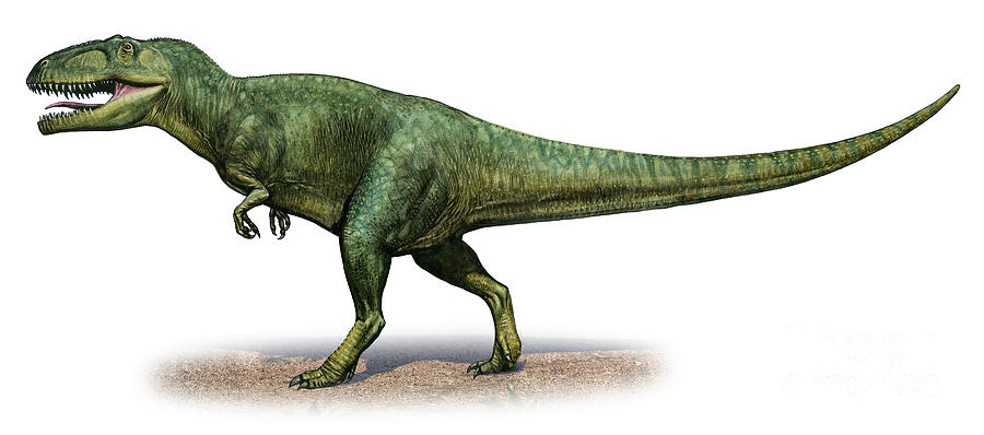 Giganotosaurus Carolinii, A Prehistoric is a piece of digital artwork ...
