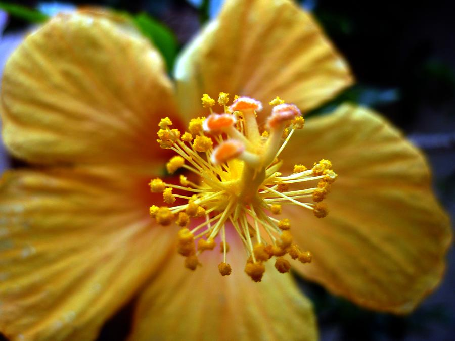 Flower Photograph - Gineceu by Beto Machado