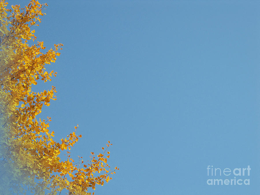 Ginkgo Fantasy In Blue Photograph