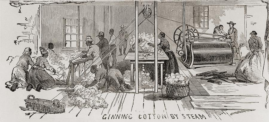 Ginning Cotton By Steam Powered Gin Photograph