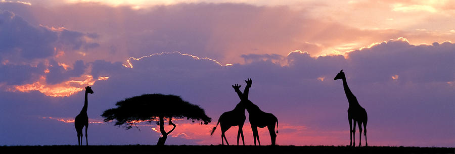 Giraffe On Horizon Photograph