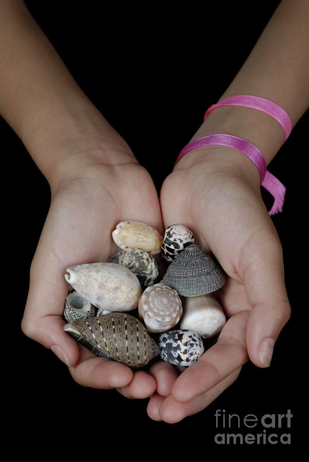 Girl Holding Shells In Clasped Hands Photograph
