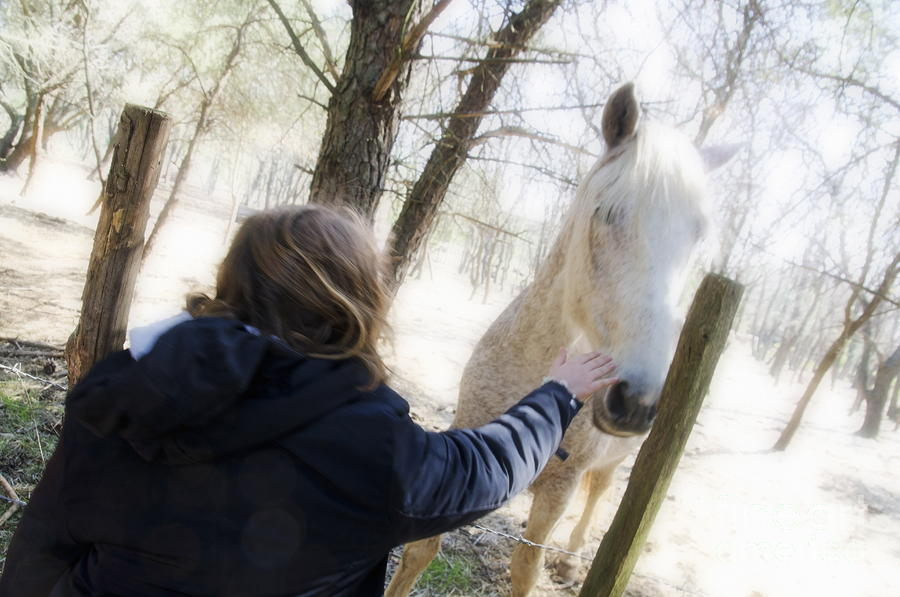 Girl Stroking Camargue Horse At Fence Photograph  - Girl Stroking Camargue Horse At Fence Fine Art Print