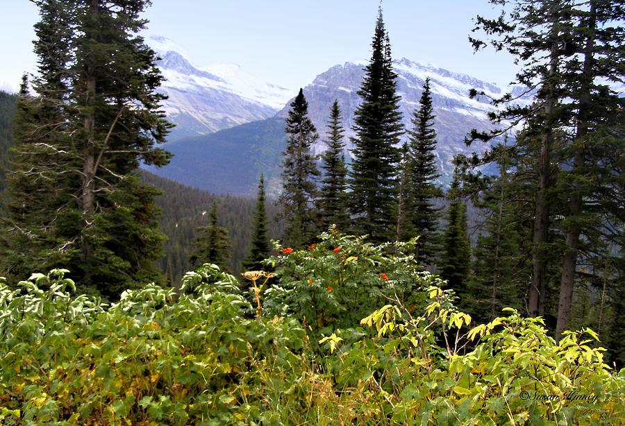 Glacier Scenery Photograph