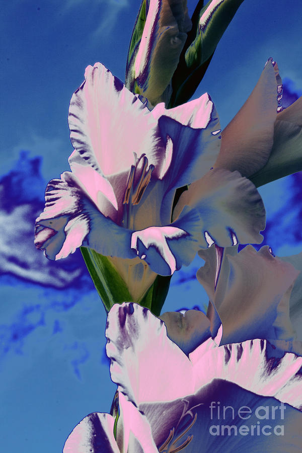 Gladioli Digital Art