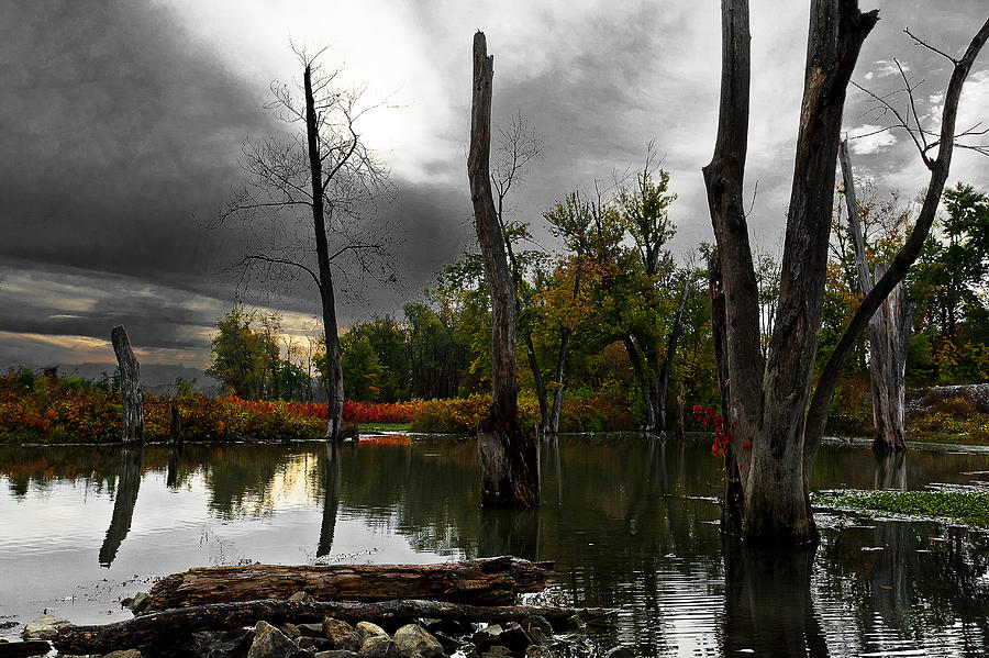 Gloomy Wetlands Photograph  - Gloomy Wetlands Fine Art Print