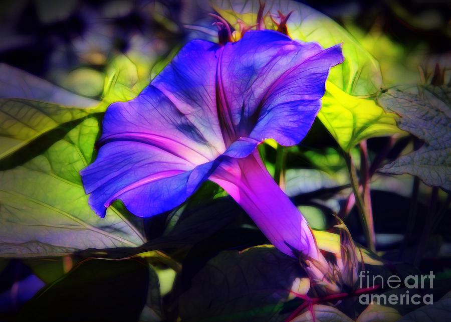 Morning Photograph - Glory Of The Morning by Judi Bagwell