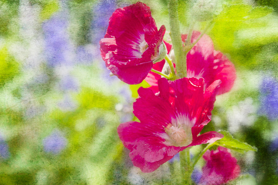 Flowers Photograph - Go Paint In The Garden by Toni Hopper