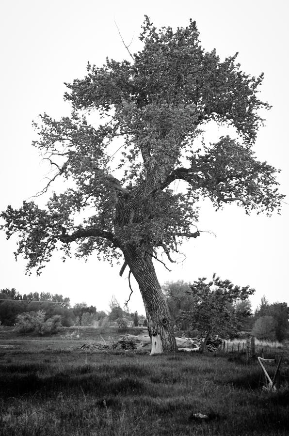 Goddess Tree 2 Photograph  - Goddess Tree 2 Fine Art Print