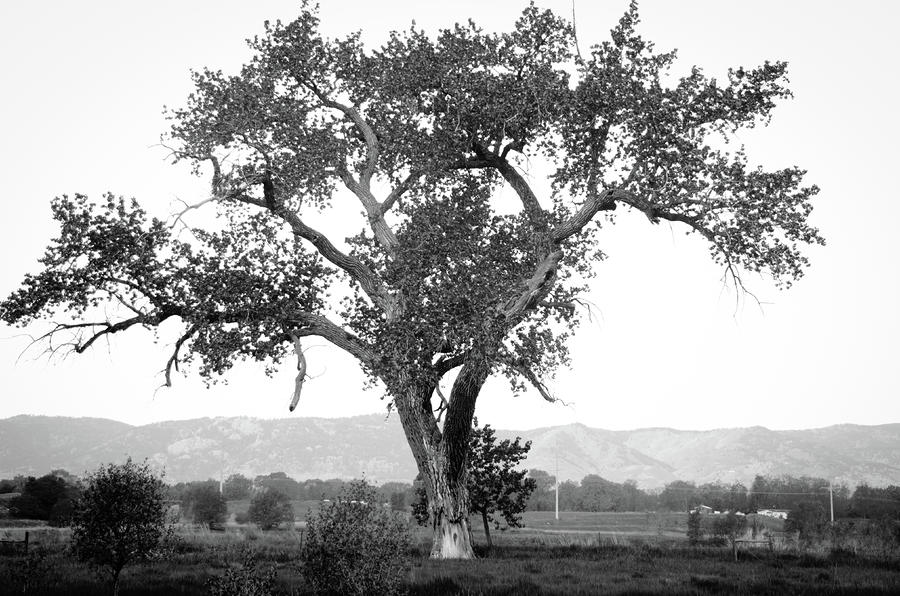 Goddess Tree 4 Photograph  - Goddess Tree 4 Fine Art Print