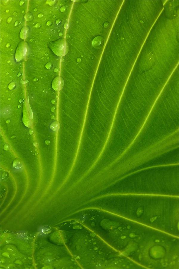 Landscape Leaf With Raindrops.. Nature Plantlife... Photograph - Gods Palette by Zannie B