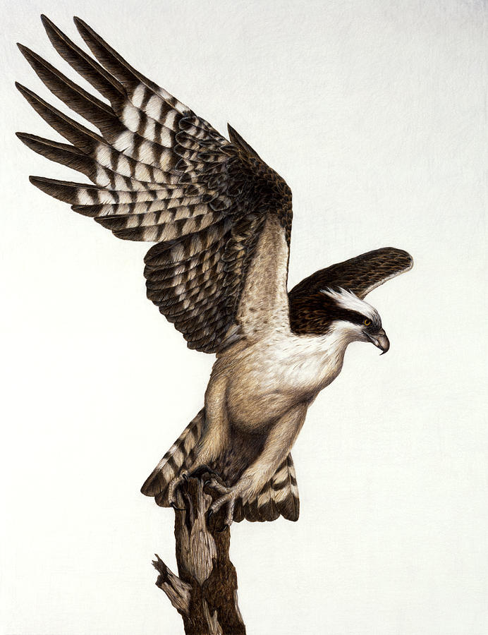 Going Fishin Osprey Painting