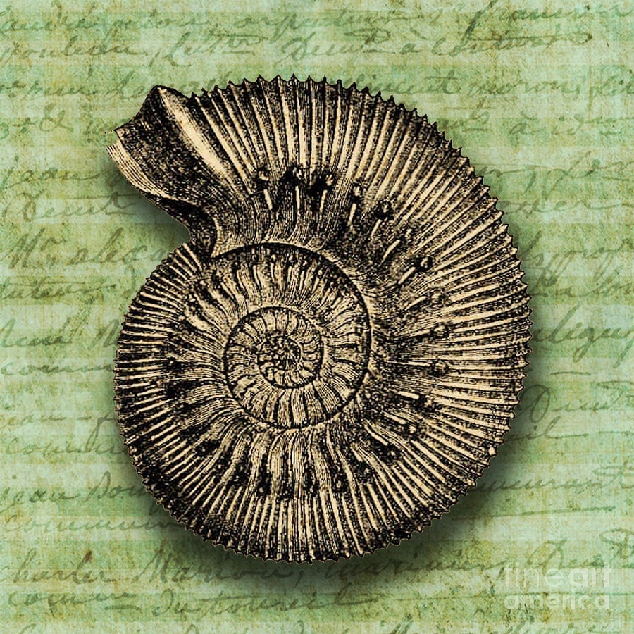 Golden Ammonite Painting  - Golden Ammonite Fine Art Print