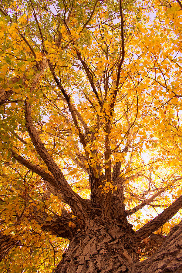 Golden Autumn View Photograph  - Golden Autumn View Fine Art Print
