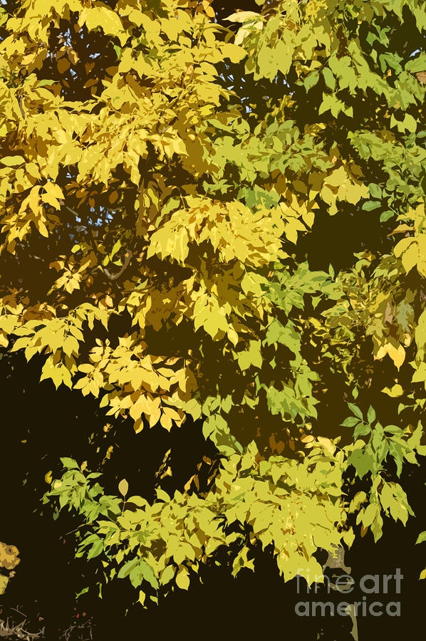 Golden Branches Photograph  - Golden Branches Fine Art Print