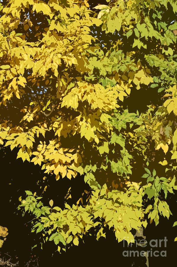 Golden Branches Photograph