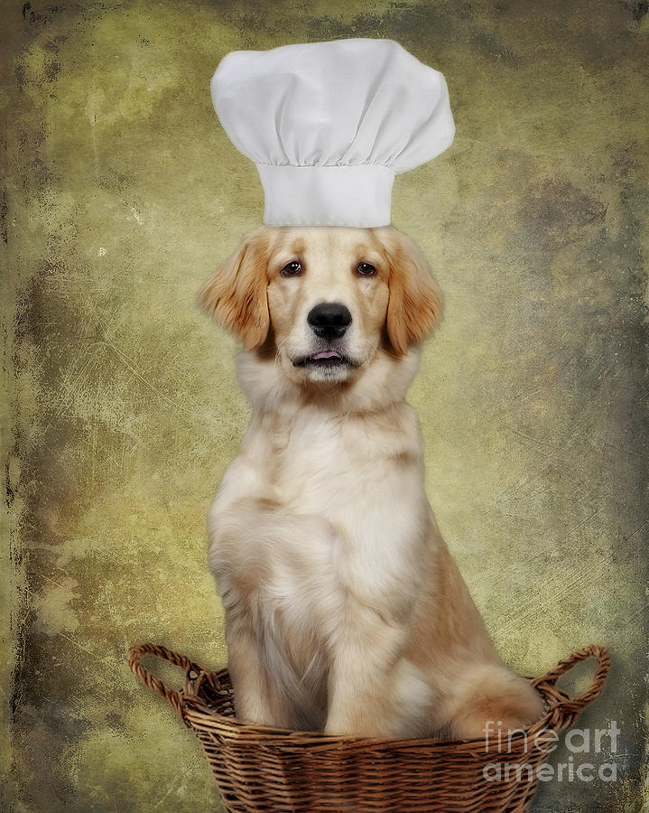 Golden Chef Photograph  - Golden Chef Fine Art Print