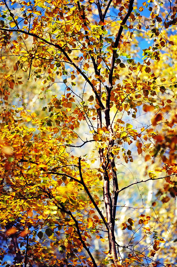 Golden Dress Haute Couture. Inspired By Autumn  Photograph  - Golden Dress Haute Couture. Inspired By Autumn  Fine Art Print