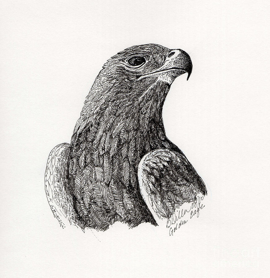 Eagle Feather Pencil Drawing Golden eagle drawing - goldenEagle Feather Pencil Drawing