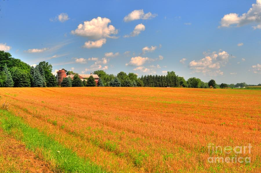 Golden  Field Photograph  - Golden  Field Fine Art Print