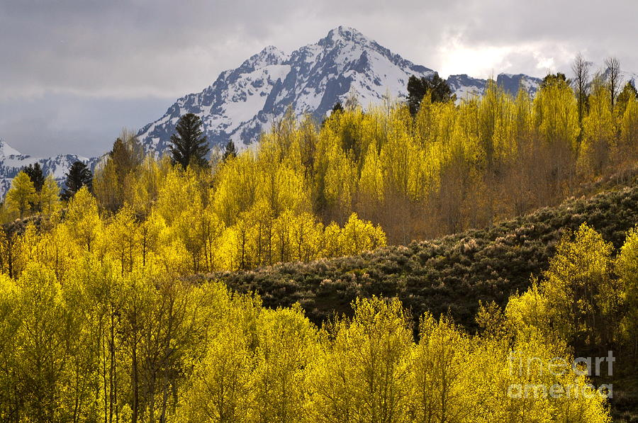 Golden Grand Teton Photograph