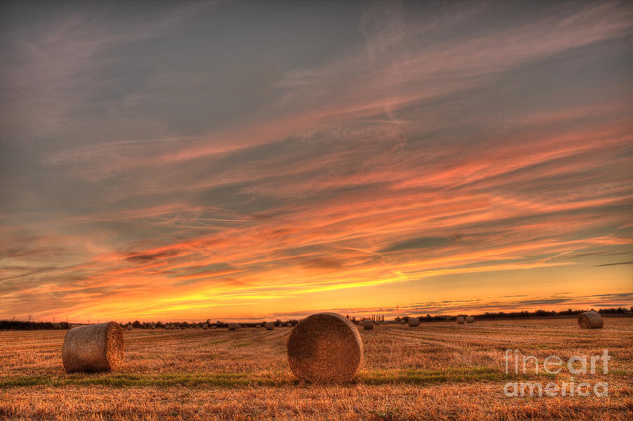Golden Harvest Photograph  - Golden Harvest Fine Art Print