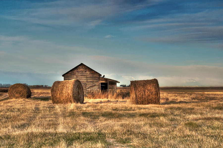 Golden Hay Photograph  - Golden Hay Fine Art Print