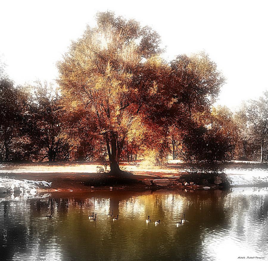Golden Meadow Photograph