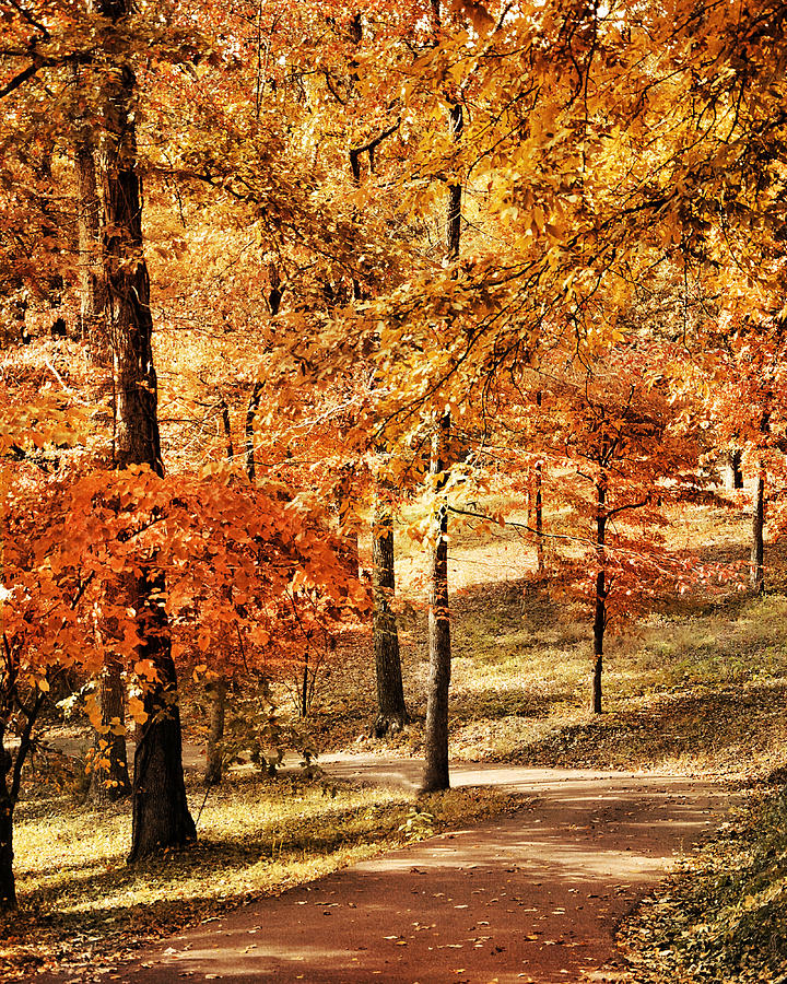 Golden Path Photograph