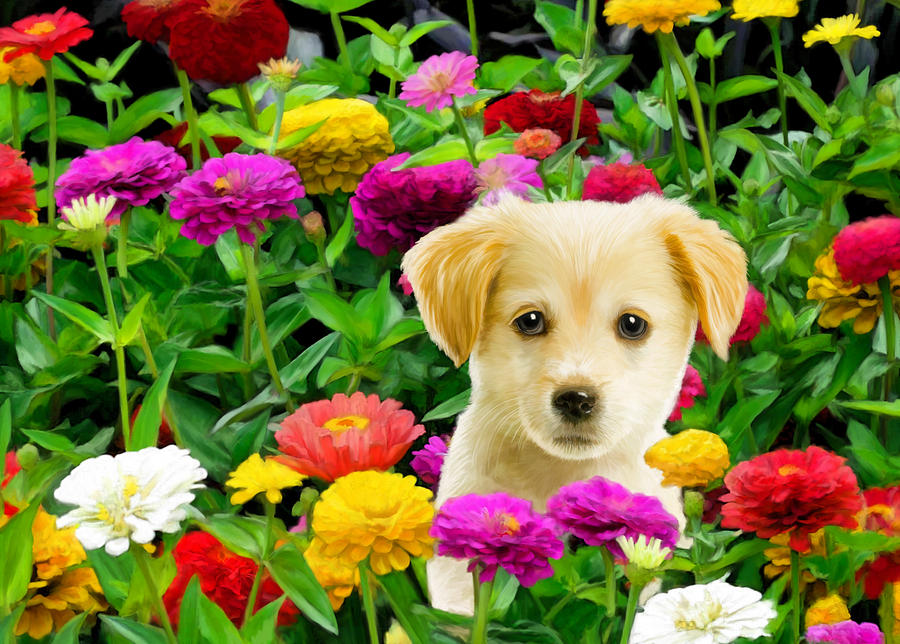 Golden Puppy In The Zinnias Digital Art  - Golden Puppy In The Zinnias Fine Art Print