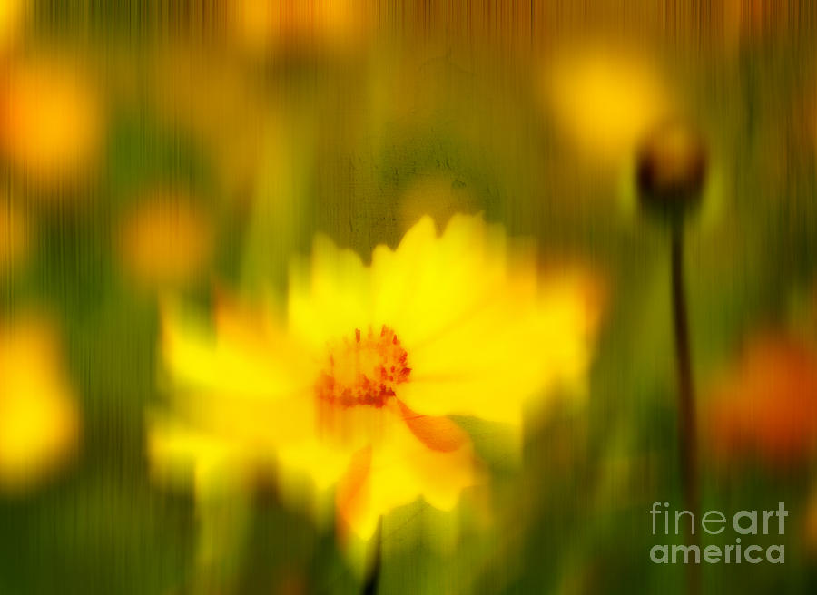Golden Summers Photograph  - Golden Summers Fine Art Print