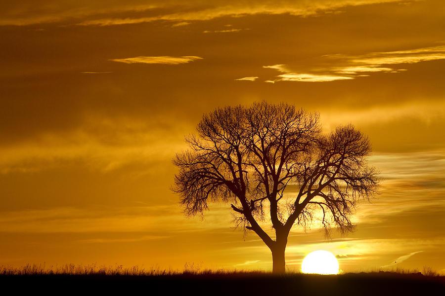 Golden Sunrise Silhouette Photograph