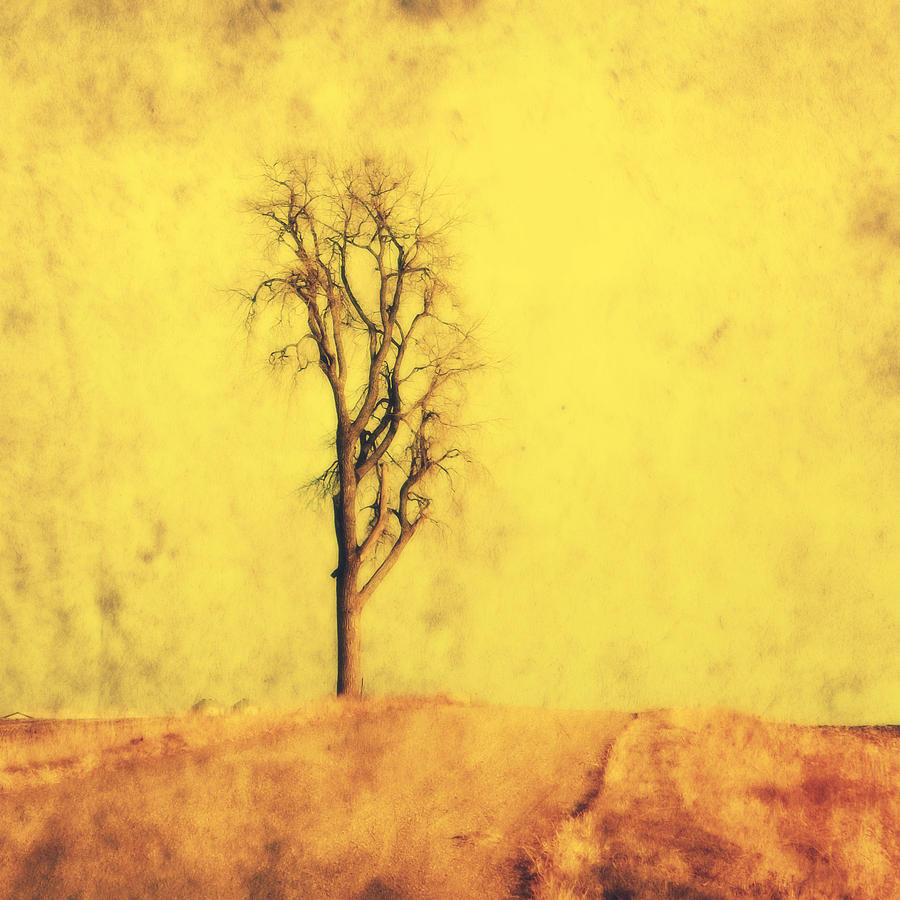Golden Tree Photograph  - Golden Tree Fine Art Print