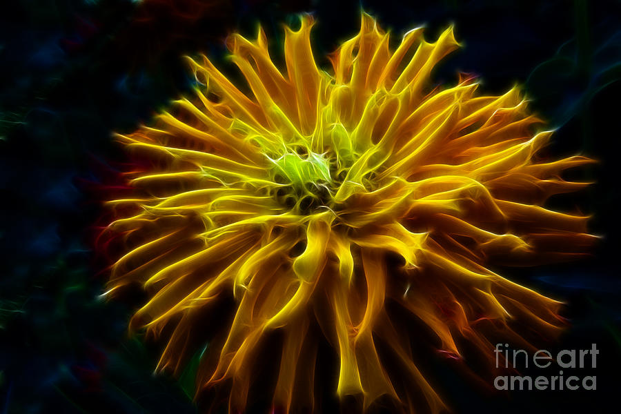 Golden Zinnia Glow Photograph