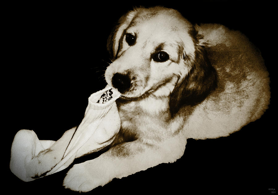 Goldens Best Friend Digital Art  - Goldens Best Friend Fine Art Print