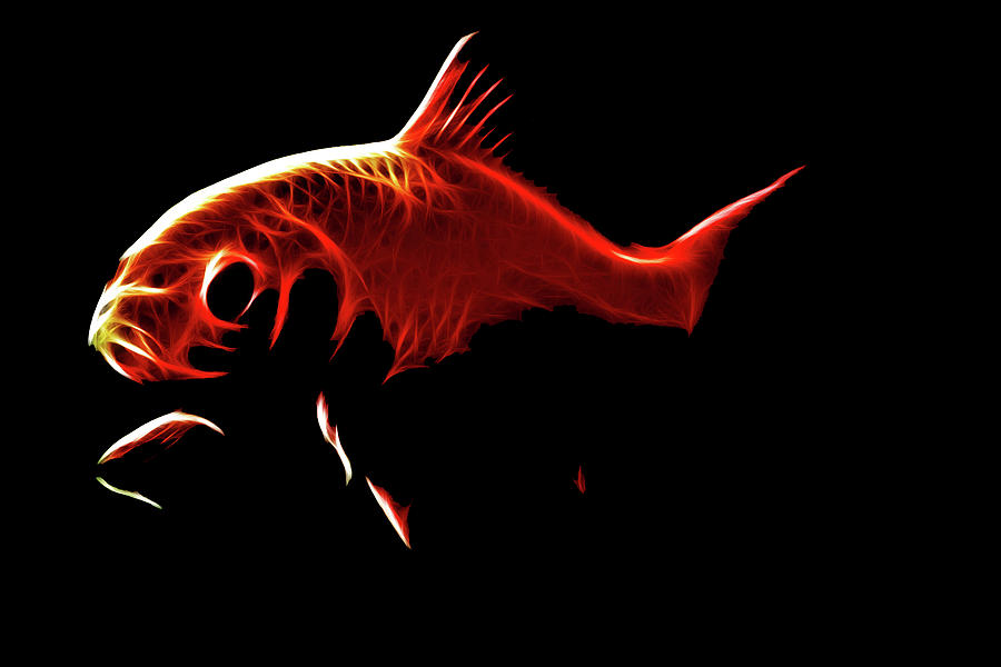 Goldfish 1 Digital Art  - Goldfish 1 Fine Art Print