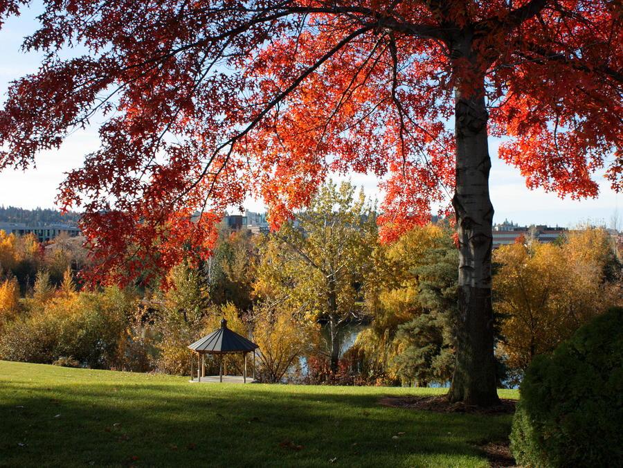 Gonzaga With Autumn Tree Canopy Photograph