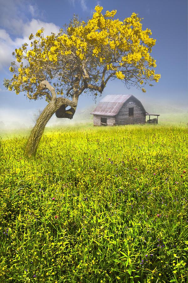 Appalachia Photograph - Good Morning Spring by Debra and Dave Vanderlaan