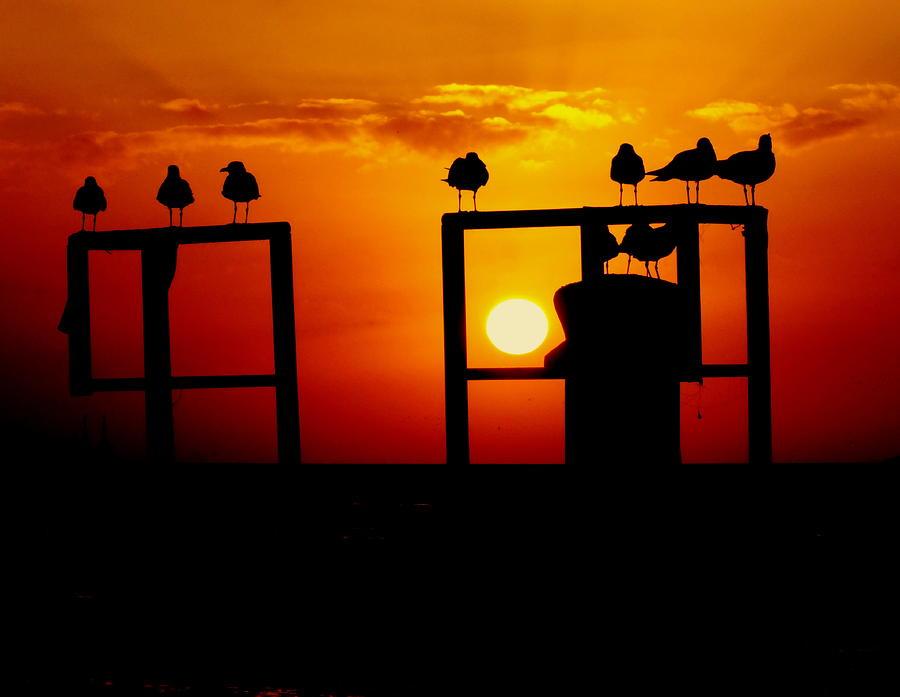Key West Sunsets Photograph - Goodnight Gulls by Karen Wiles