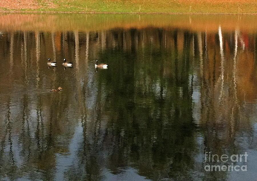 Goose Goose Duck Goose Photograph