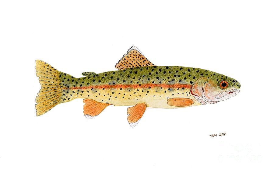 Redband Painting - Goose Lake Redband Trout by Thom Glace