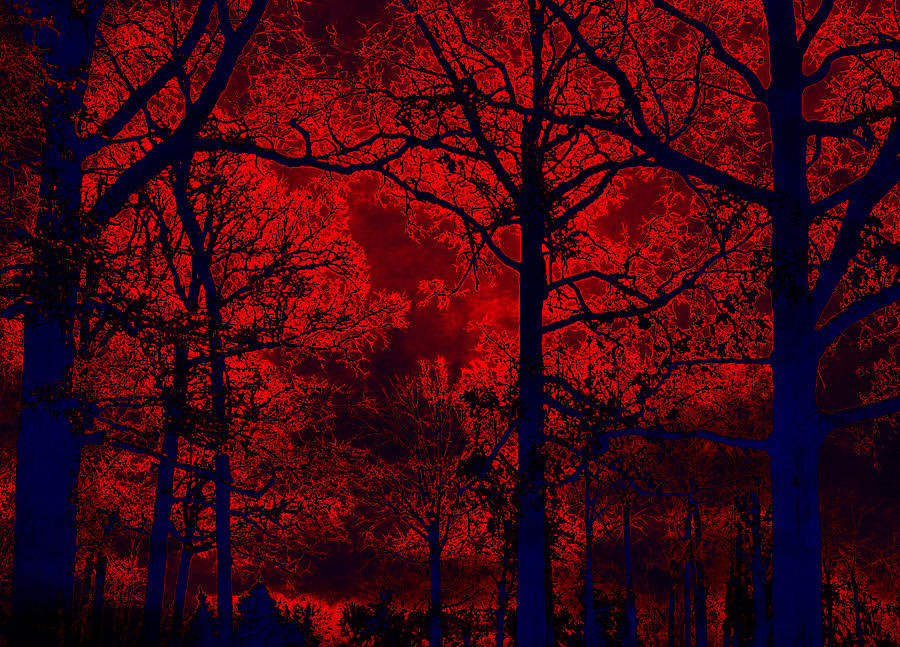 Gothic Red And Blue Surreal Fantasy Trees Photograph