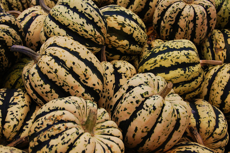 Gourds In White And Green Photograph